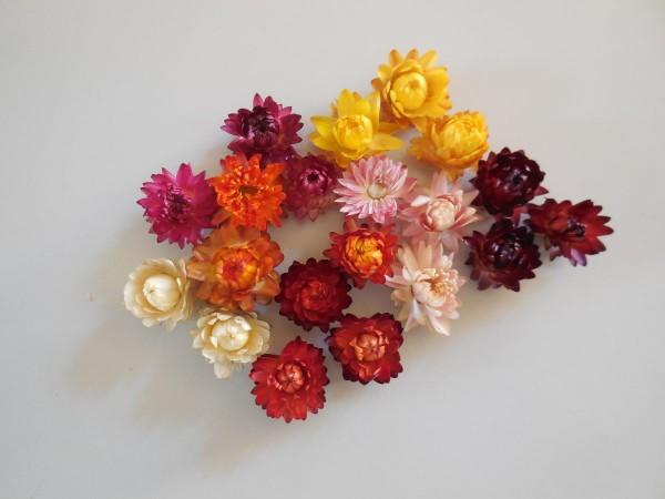 Strohblumen/ klein, gemischte Farben