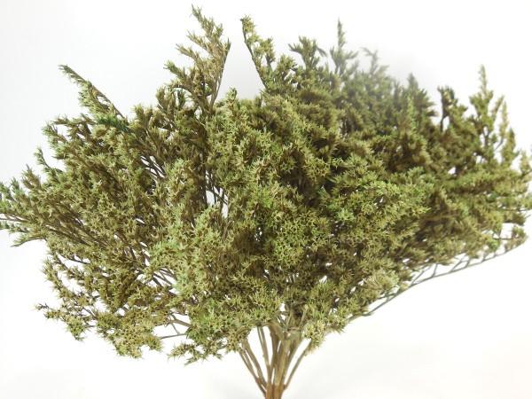 Statice Tatarica, Laubgrün, 20Gramm