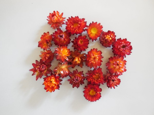 Strohblumen/ klein, Rot