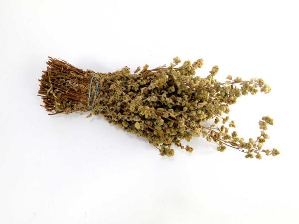 Majoran, ein Bund, 20cm
