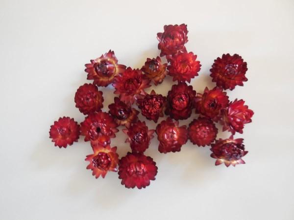 Strohblumen / Klein, Dunkelrot