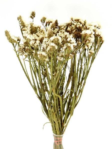 Strandflieder, Weiß, *Bioanbau*