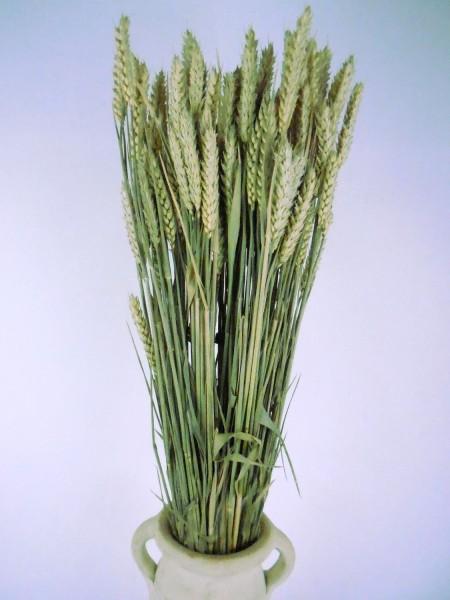 Weizen, Naturgrün