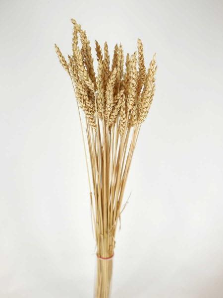 Weizen, Sonnengebleicht, *Bio*, 60cm