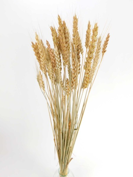Weizen / gemischt, jung geschnitten,*Bio*, 60cm