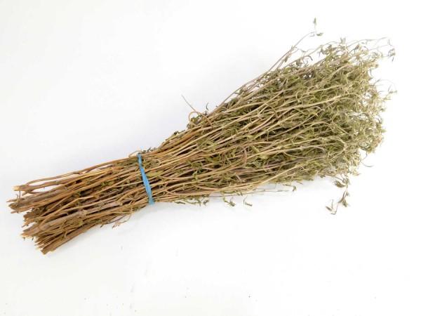 Bohnenkraut, ein Bund, 30cm