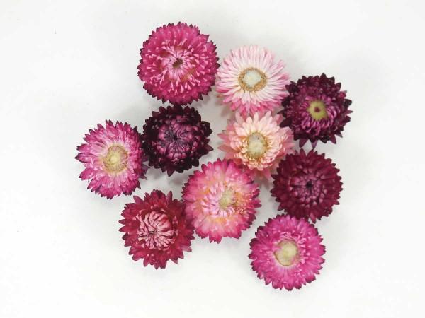 Strohblumen *Bioanbau*, Altrosa- Lila, 3-4cm