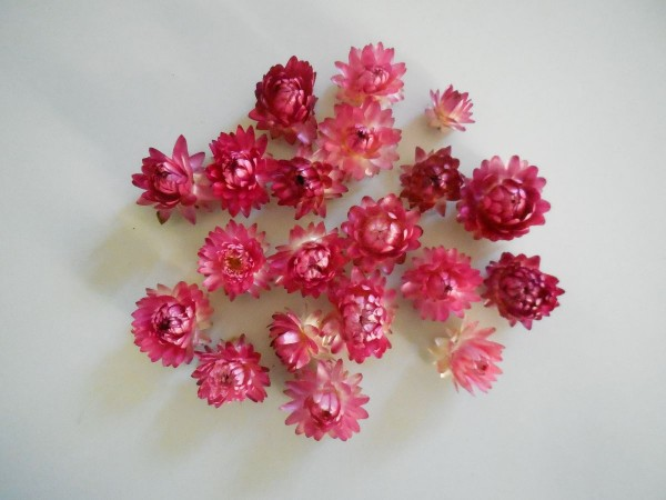Strohblumen/ klein, Lila-Altrosa