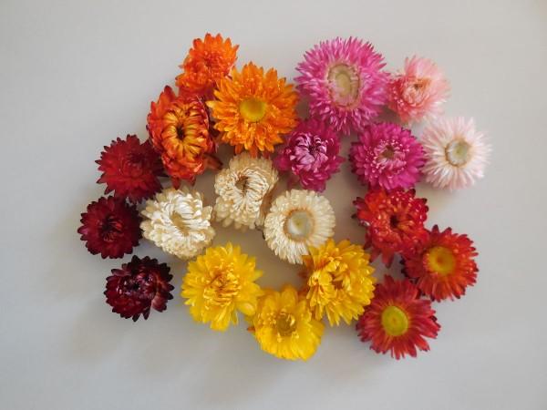 Strohblumenköpfe, Bunt gemischt. 20 Stück, 3,5-5cm
