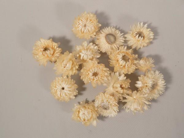 Strohblumen/ Weiss