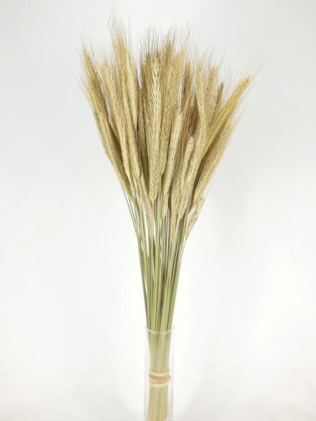 Roggen, Bio-zertifiziert*, 50cm