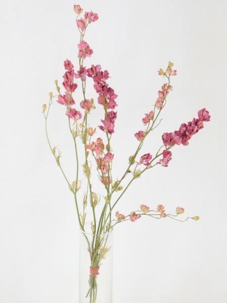 5x Rittersporn, Rosa, 20- 35cm