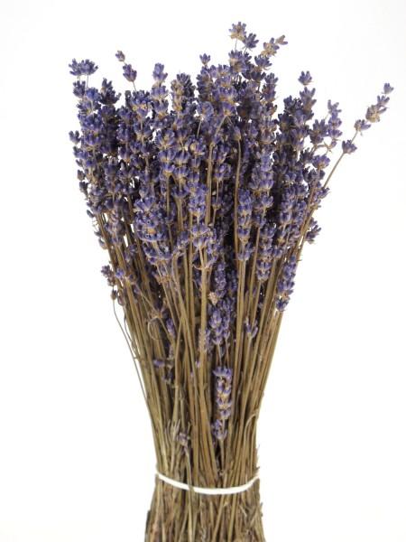 Echter Lavendel, 30cm