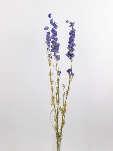 3 Stängel Rittersporn, blau, 60-70cm