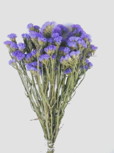Strandflieder, Blau-Lila,*Bioanbau*