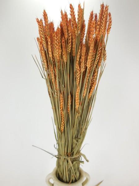 Weizen/ Orange, 70cm