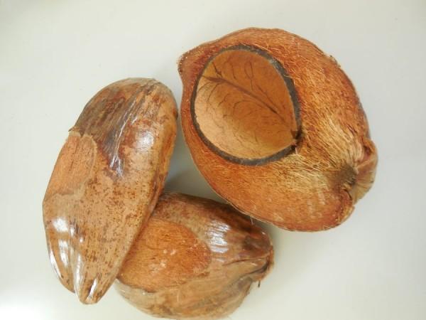 Cocosnuss/ halbiert