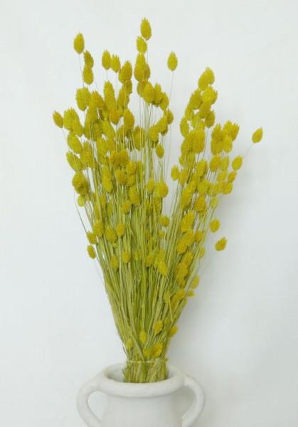 Phalaris/ Gelb, ein halbes Bund, Z614a