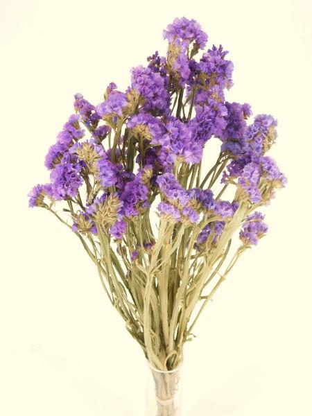 Strandflieder, helleres Violett, *Bioanbau*