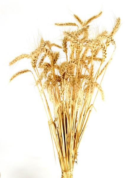 Weizen mit Grannen, Sonnengebleicht *Bio*, 60cm