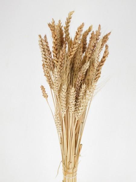 Weizen / gemischt, *Bio*, 60cm