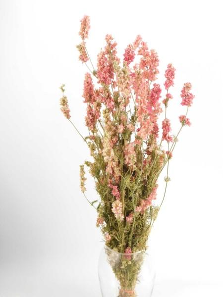 Rittersporn, Rosa, 70cm