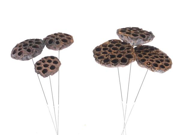 Lotus, mit Draht, 10cm und 7cm