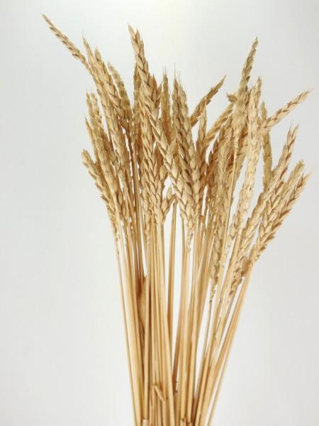 Urgetreide Dinkel, *Bio- zertifiziert*, 60cm