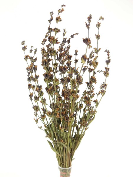 Salbeiblüten, *Bio*, 40cm