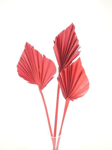 Palmblatt, Rot, 6-9cm