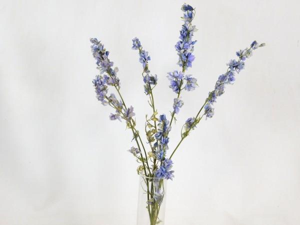 5x Rittersporn, hellblau, 20- 35cm