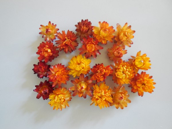 Strohblumen/ klein, Orange