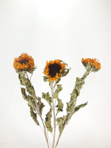 getrocknete Sonnenblume, 5cm, Länge:65cm