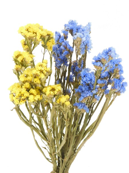Strandflieder, Hellblau + Gelb, *Bioanbau*