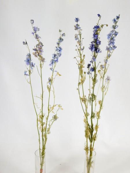 3 Stängel Rittersporn, hellblau, 60-70cm