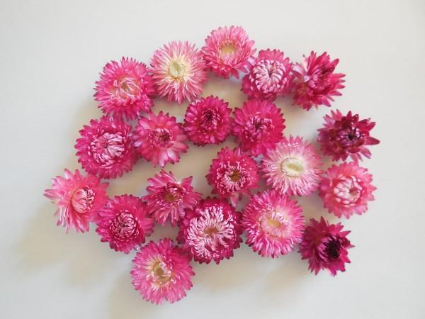 Strohblumen / Lila-Altrosa