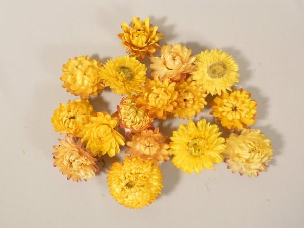 Strohblumenköpfe, Gelb. 20 Stück, 3,5-5cm
