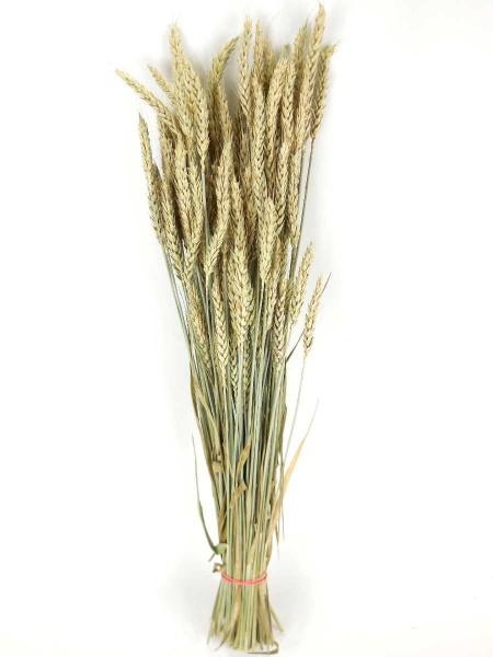 Weizen, Naturgrün,*Bio, 60cm