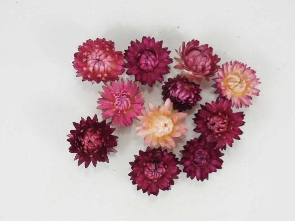 Kleine Strohblumen *Bioanbau*, Altrosa- Lila, 2-3cm