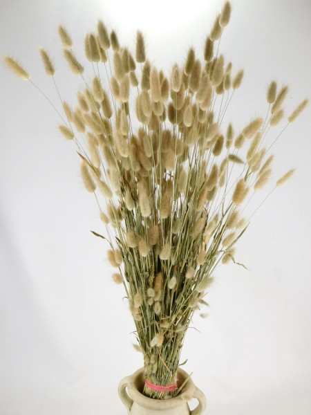 Samtgras, Natur-Beige,70cm