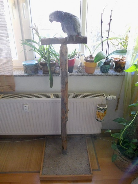 Papageien Freisitz/ Sitzstange, P12