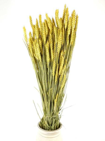 Weizen, Gelb, 70cm