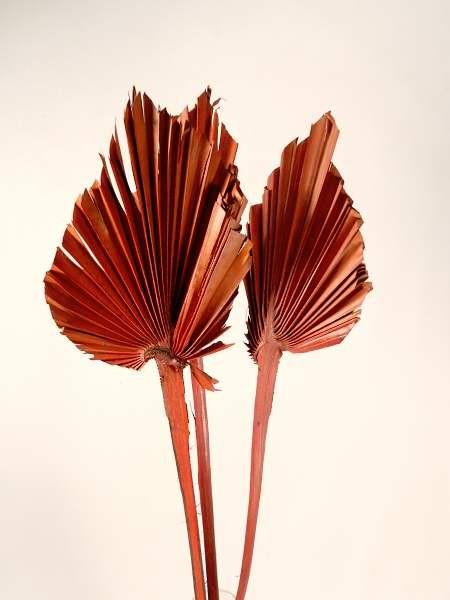 Palmblattherzen/ Mahagonibraun, Z221