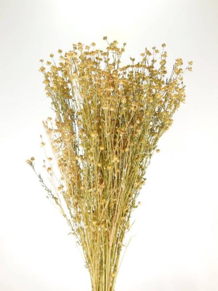 Lein (Flax),60cm