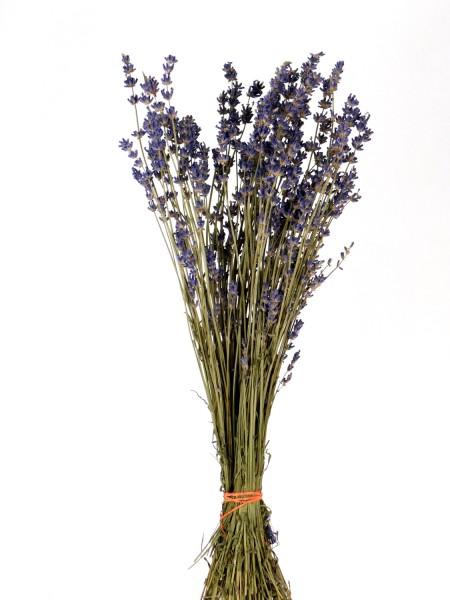 Echter Lavendel, 40cm