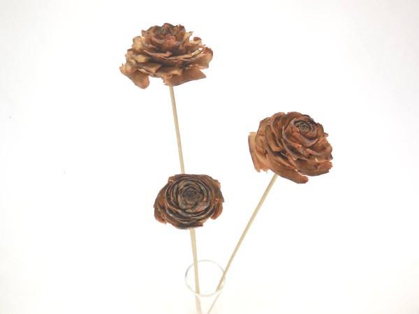 Zapfenblumen, 3,5- 4,5cm