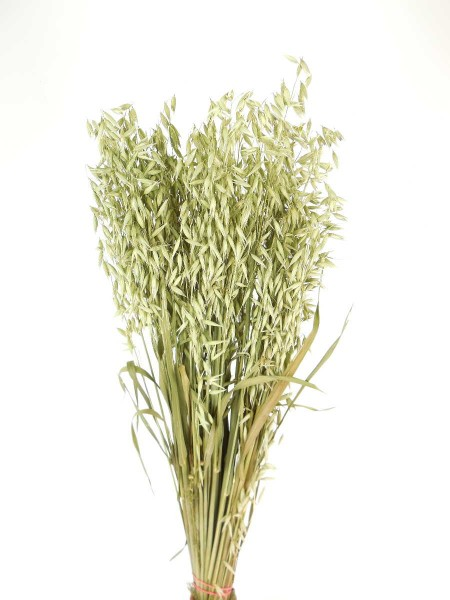 Hafer, natürlich Grün,*Bio*,60cm
