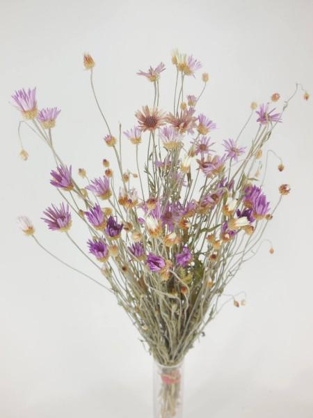 Papierblume, 50cm, Bio-zertifiziert