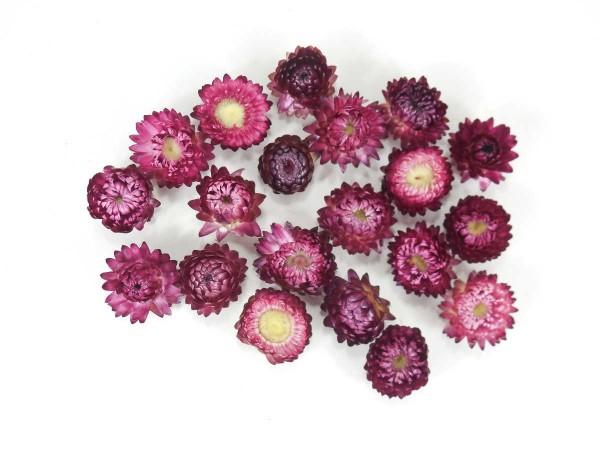Strohblumen/ klein, Lila-Altrosa, 2-3cm