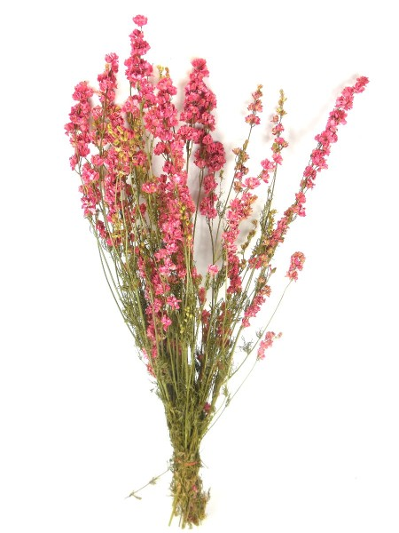 Rittersporn, Rosa, 60cm